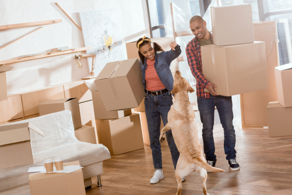 Moving House with Your Dog